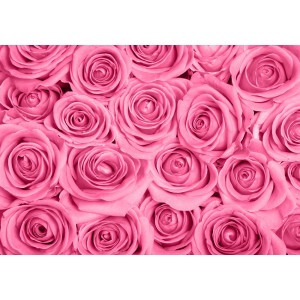 Fotomural bed of pink roses